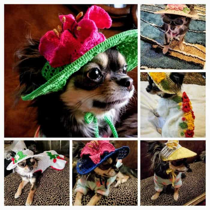 Chihuahua in different Spring hats