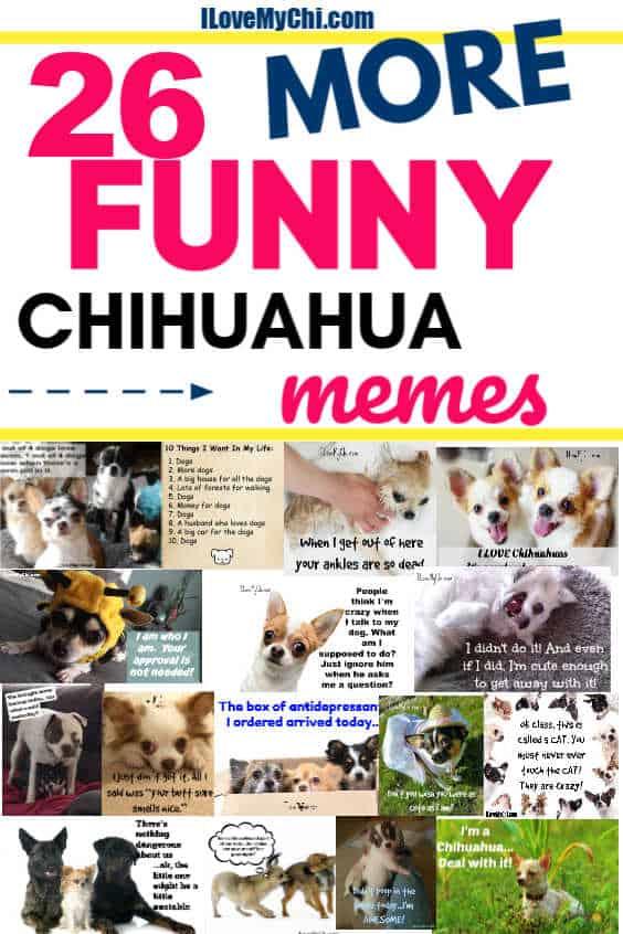 various meme photos