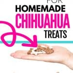 chihuahua dog licking its lips looking at a hand holding homemade treats