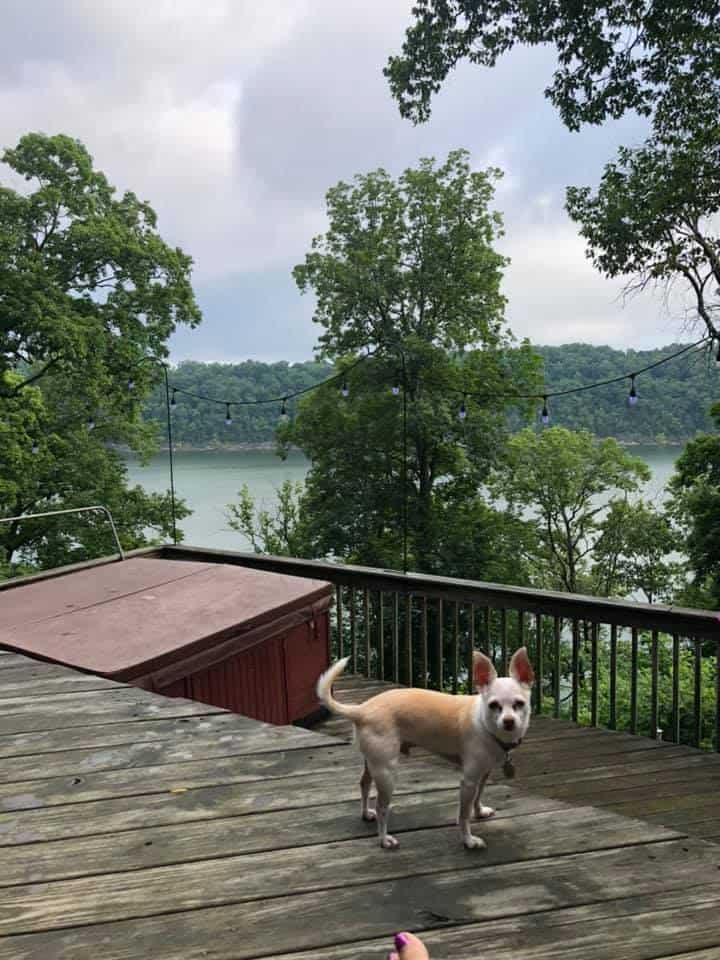 chihuahua dog on dock by lake