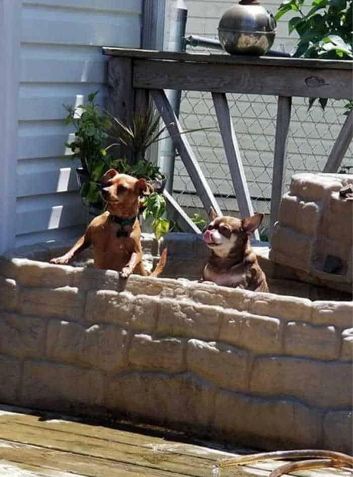 2 dogs peeking over low bricj wall