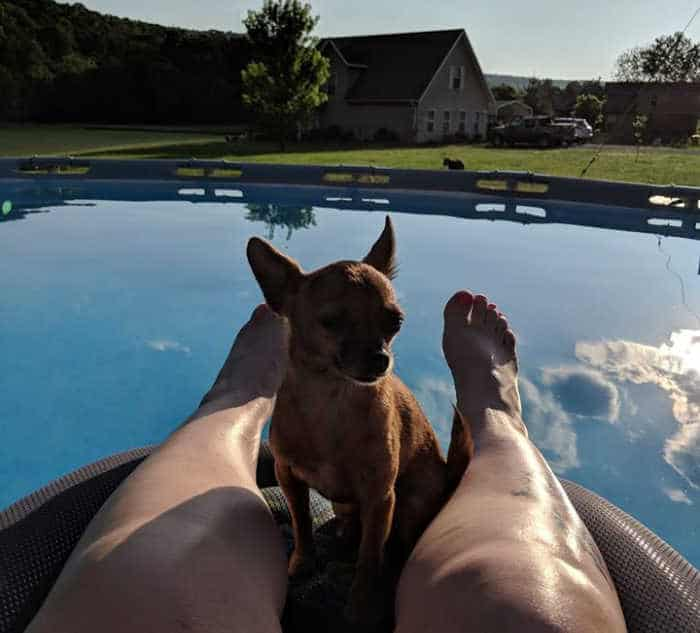 chihuahua sitting between woman's legs on a float in a pool