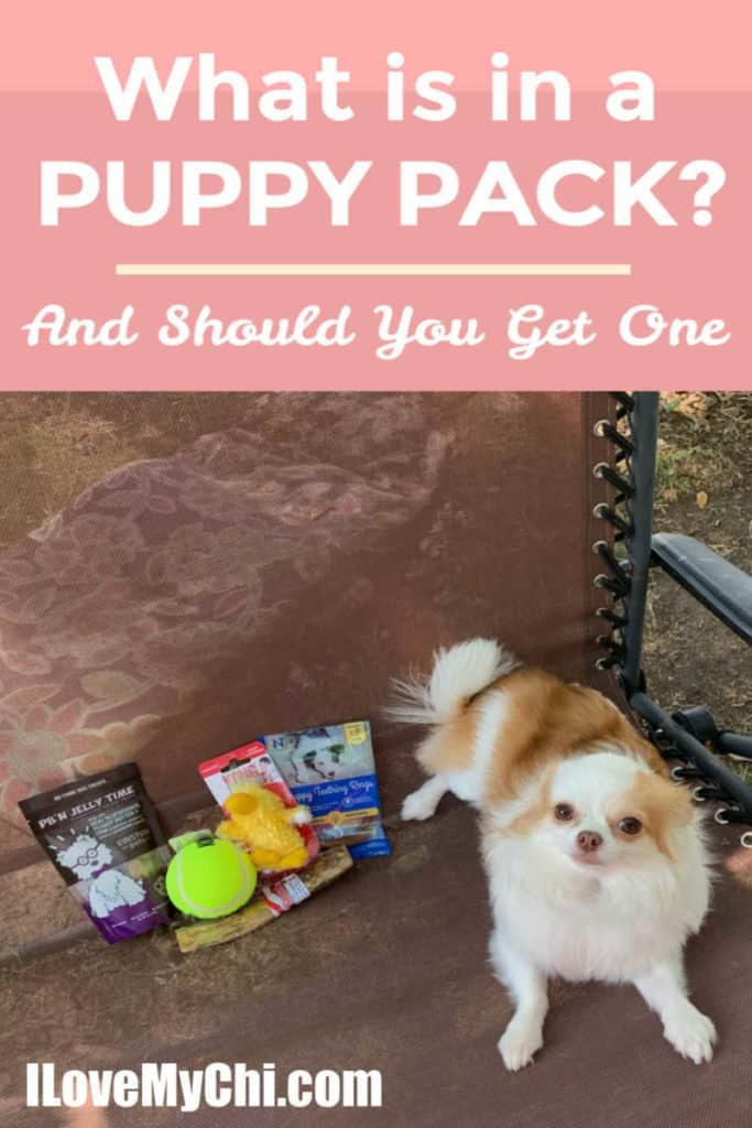 white and tan chihuahua with products from PuppyPack