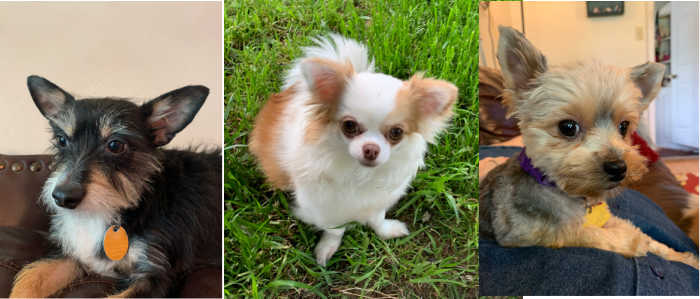 photos of 3 dogs