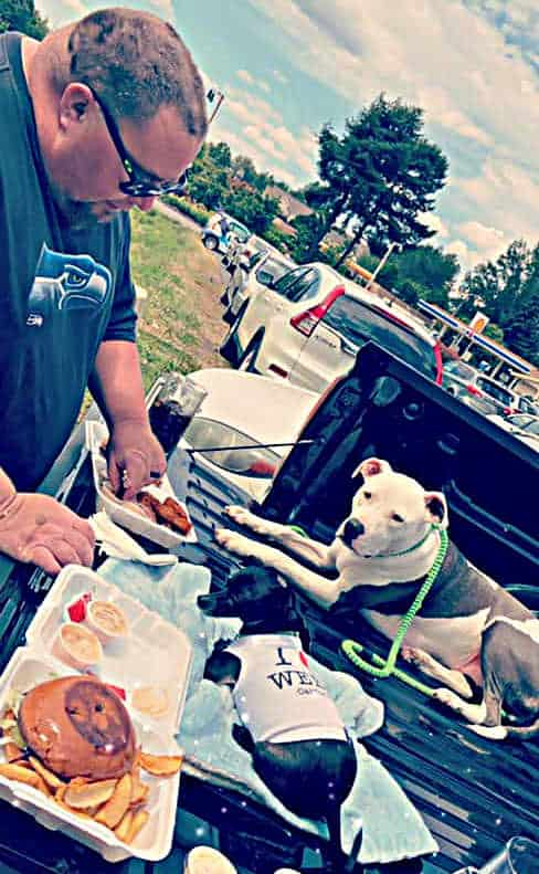 man making sandwich with chihuahua and pitbull looking on