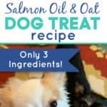 Salmon Oil and Oat Dog Treat Recipe