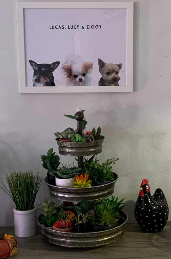 portrait of 3 dogs above sideboard with 3 tier tray and plants