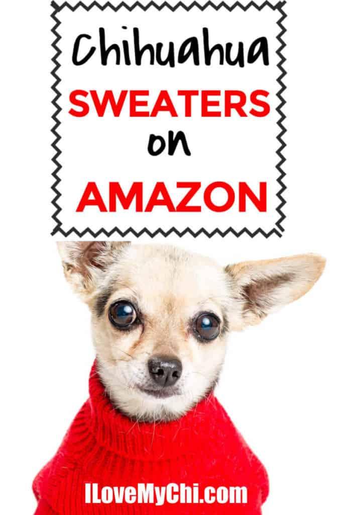 chihuahua dog wearing sweater