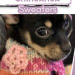 cute chihuahua in multi-colored sweater