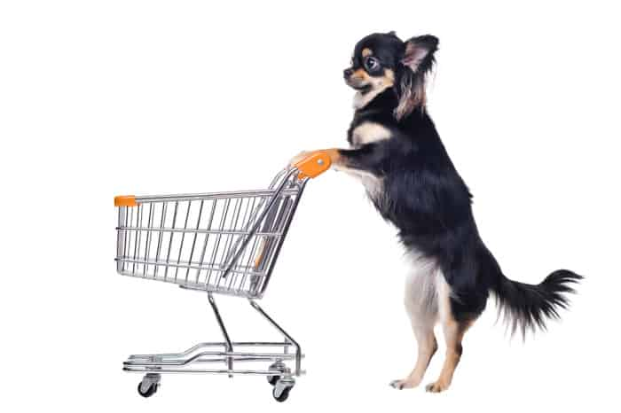 Standing chihuahua with shopping cart isolated on white