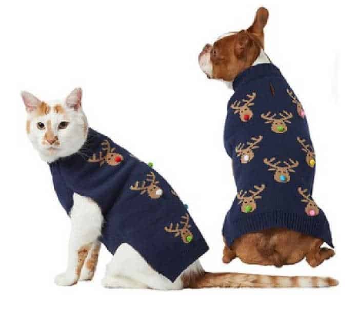 dog and cat wearing a sweater