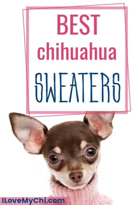 chihuahua wearing pink sweater