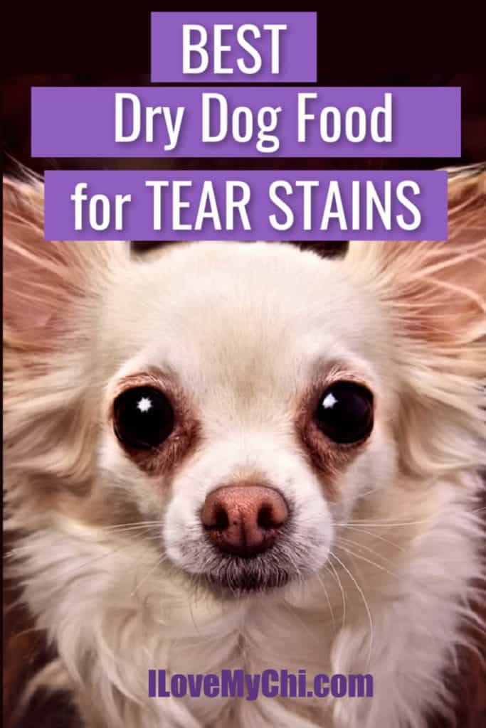 long hair chihuahua with tear stains