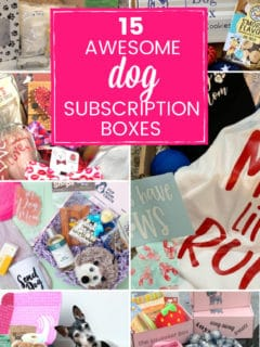 various photos of dog subscription boxes
