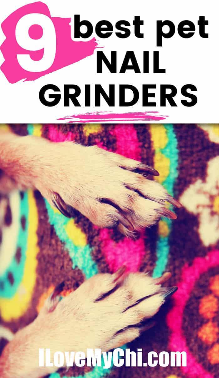 dog paws on colorful rug